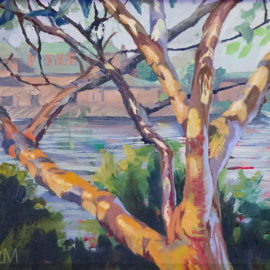 LizM: Tree by the Charles painting